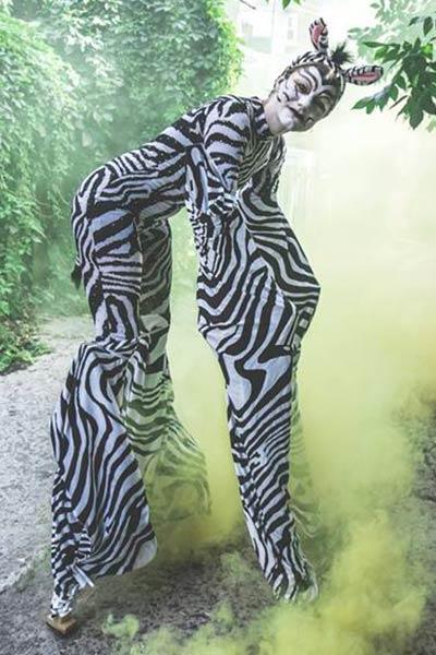 zebra-stilts-animals